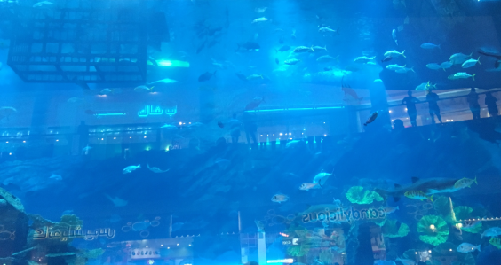 Dubai Aquarium - Dubai Mall 2017